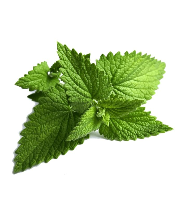 Mint Extract Oil