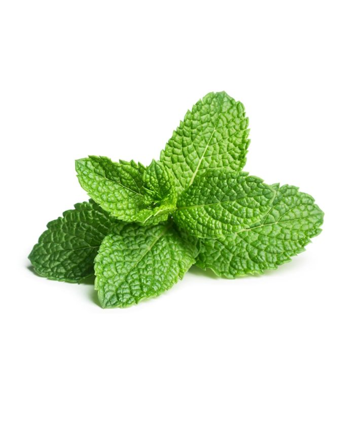 Mint Oil Extract Peppermint
